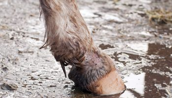Brinicombe Equine recommends Think Mud for mud fever this winter.