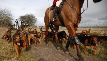 Hunt season hoof care